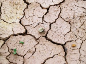 Cracked Ground as a Result of a Drought